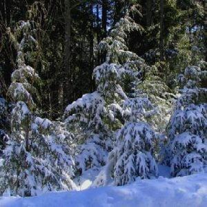 Chubby Stove Winter